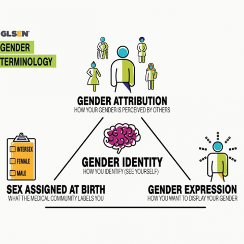 Infographic TEXT: Gender Terminology; Gender Attribution, how your gender is perceived by others; Sex Assigned at Birth, what the medical community labels you; Gender Expression, how you want to display your gender; Gender Identity, how you identify, see yourself. These four gender terms are arranged in a triangle with Gender Identity at the center. Accompanying the terms, respectively, are illustrations.